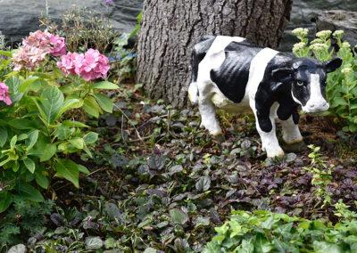 koe in de bloemenwei