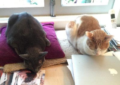 Samen op het bureau